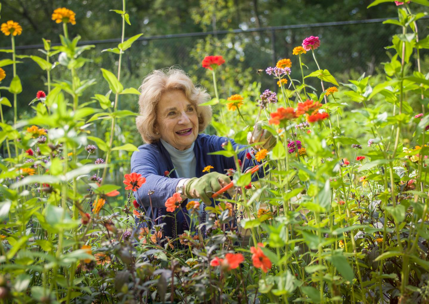 A resident of Orchard Cove cuts wildflowers from her garden.